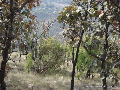 Paisaje en el descenso del Cerro Los Bailadores