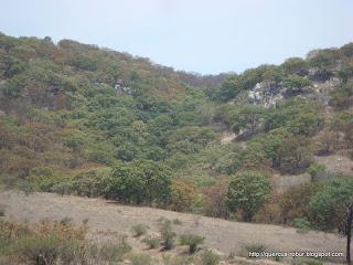 Cañada de encinos
