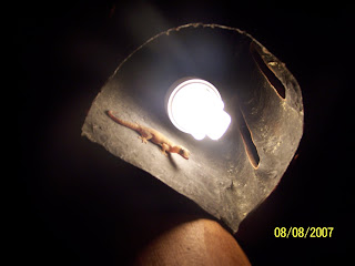 Gecko en Punta de Mita en el 2007