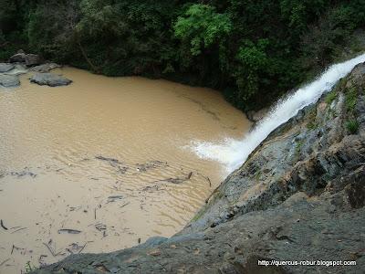 Primer cascada rumbo al Salto del Nogal