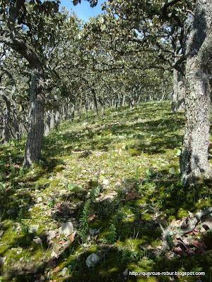 Ultimas centenas de metros antes de llegar al primer picacho en el Cerro Grande de Ameca