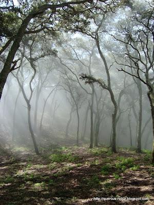 Neblina del Cerro Grande de Ameca