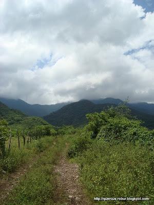 Camino del Cerro Grande de Ameca a Ahualulco