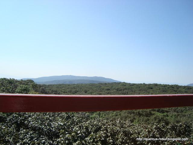 Cerro Planillas visto desde Torre 2 (BLP)