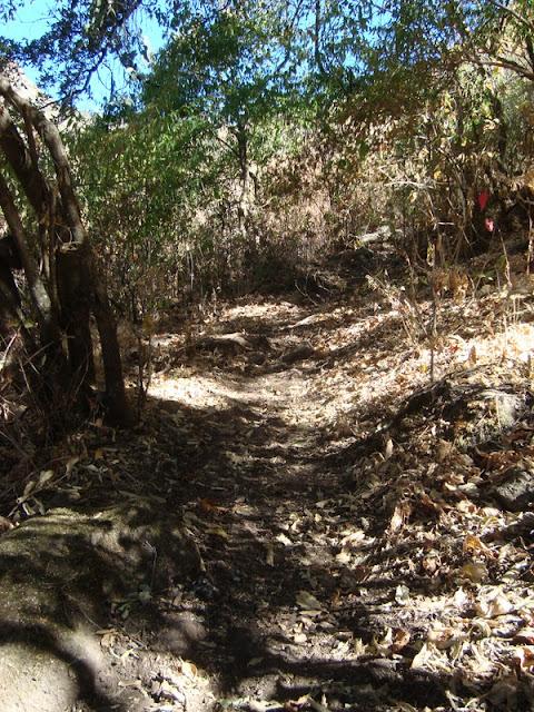 Vereda en la Barranca La Morita, Cerro Viejo