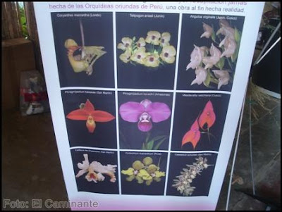 informacion botanica en el xiv festival de la orquidea, moyobamba