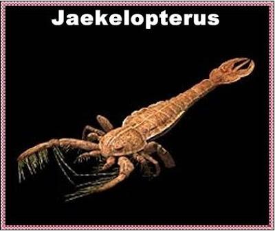 jaekelopterus