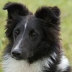 Jaffa er 9 år, og har det bedst som hyggehund derhjemme og lege med sin frisbee.