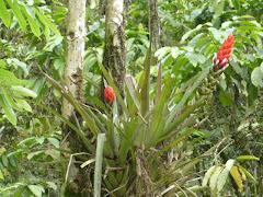 vegetacion del Canton Echeandia