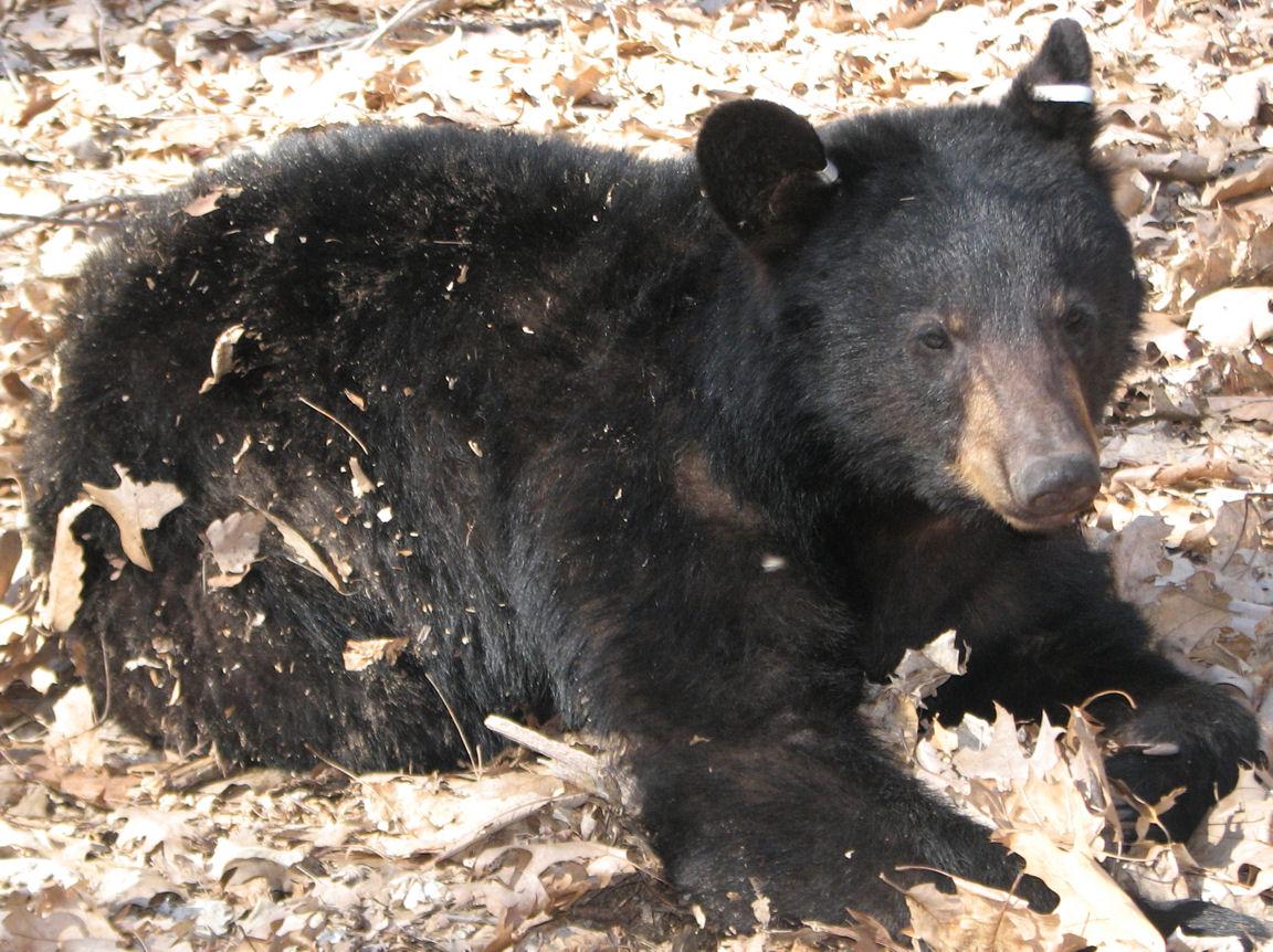 [bear.htm]
