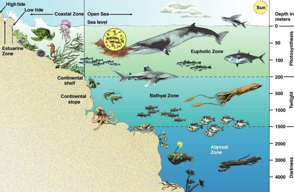 Bassic Diagram Of The Ocean. ocean ecosystem diagram free images at. impact  of ocean acidification on marine food webs marine. the water cycle diagram  5th 1167 750 water. ocean 39 s for2002-acura-tl-radio.info