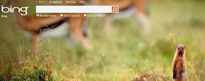 Nuevo el Bing: Liked results