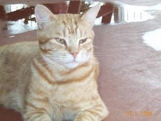 Diario de un Gato: Día 983 de mi cautiverio