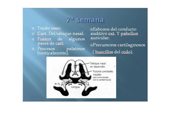 7ma SEMANA