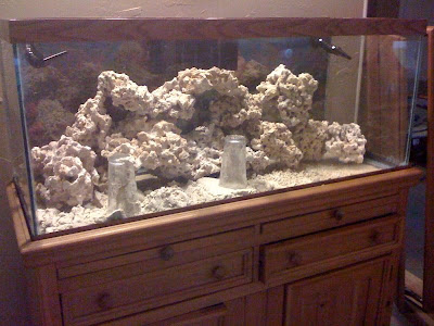 Into My Reef: Aquascaping the reef