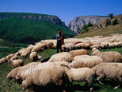 "Luke 15:4 says, ""If a man has a hundred sheep and one of them gets lost,"