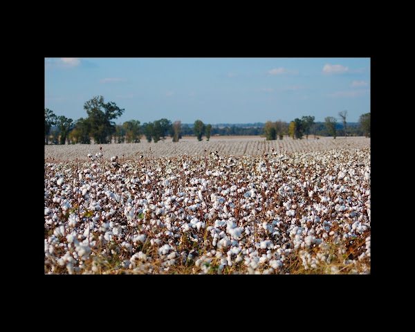 Cotton on Gunwaleford Road