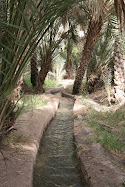 Al Ain Oasis