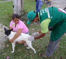 Exitosa jornada de vacunación de perros y gatos