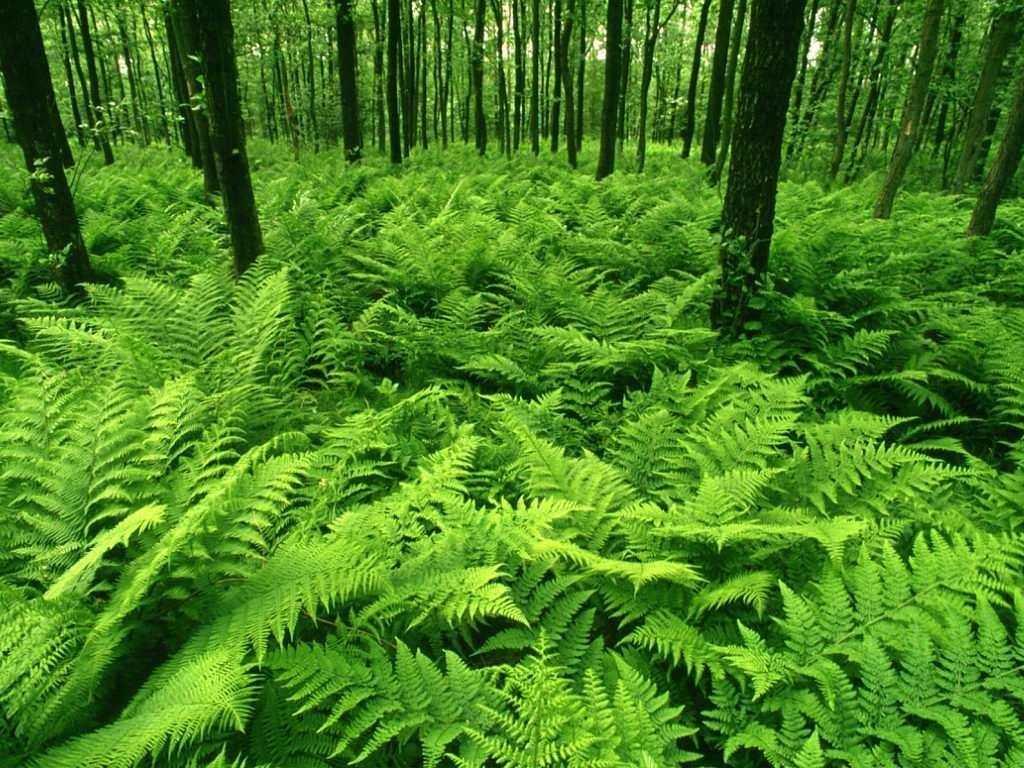 Trip 39 s blog greeeeen green for Plantas ornamentales helechos