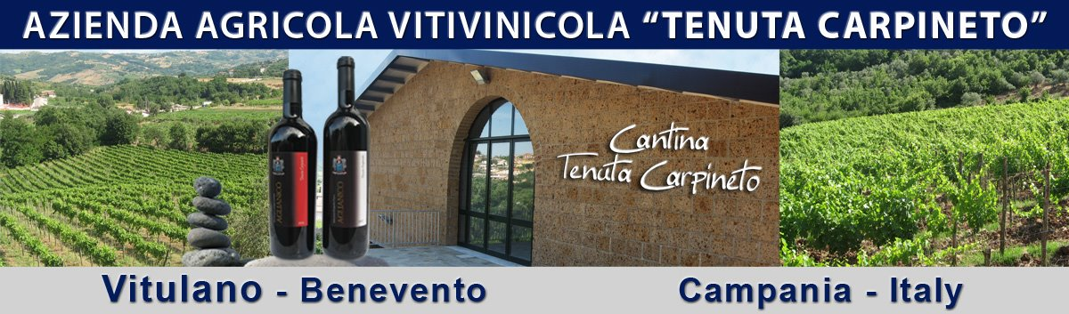 Azienda Vinicola Tenuta Carpineto