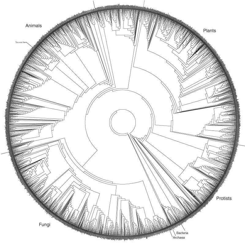 tree of life. Tree of Life