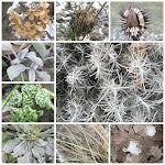 Januar - Pflanzen