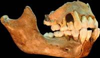 Arqueología prehistórica - Página 3 Machoire-neandertal