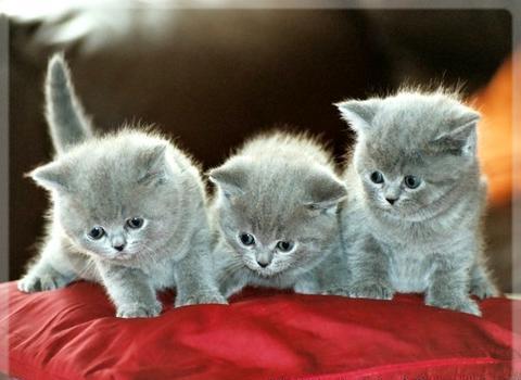 kedi 1 - Kedi Ve Yavru Kedi Bak�m� �le �lgili Genel Bilgiler