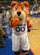 A full body view of the University of Memphis Tiger mascot wearing a basketball uniform on the court at a basketball game.