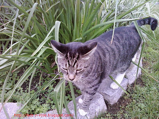 This cat loves to be in the garden