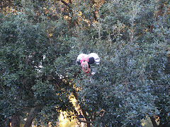 Minnie-in-the-Tree