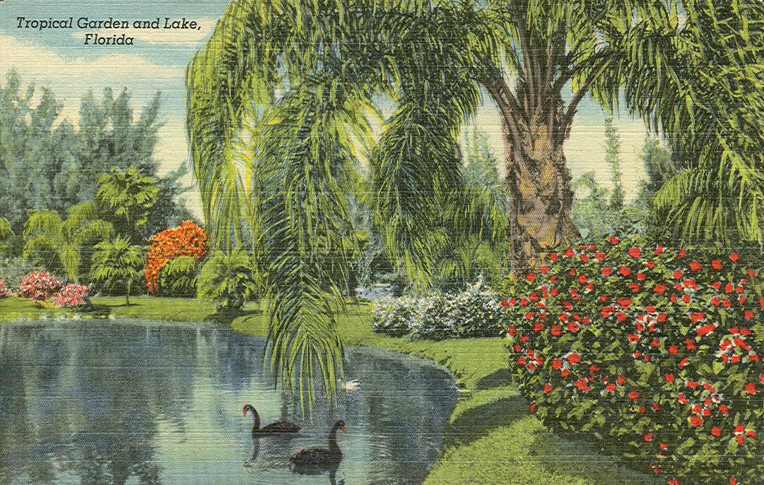 Vintage Travel Postcards Sarasota Jungle Gardens