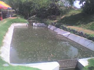 Proyecto de investigacion vida en el estanque Piscinas para tilapias