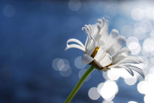 Stunning Examples of Bokeh Photography