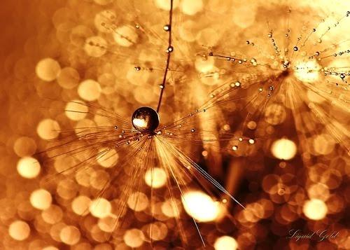 bokeh+chethstudios.net+%282%29 Stunning Examples of Bokeh Photography