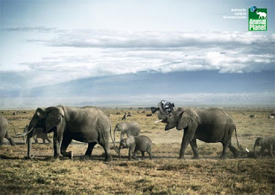 animal p Astonishing Animal Advertisements Creating Awareness