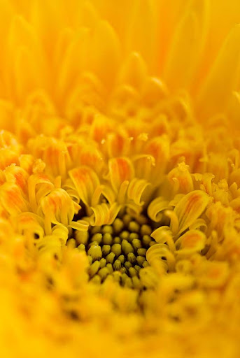 Yellow  by meemo Colors Around Us: Yellow Photography Inspiration
