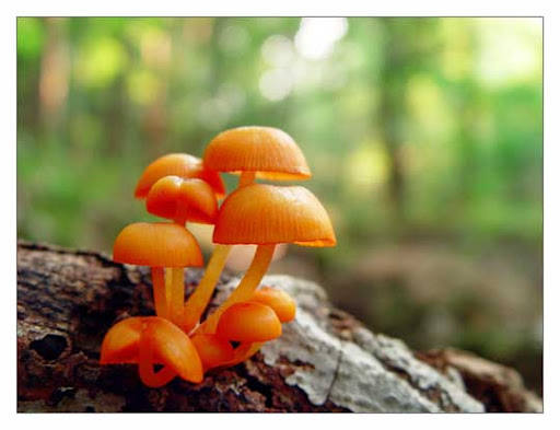9 orange mushrooms by littleredelf All Things Orange | Color Photography Inspiration #2