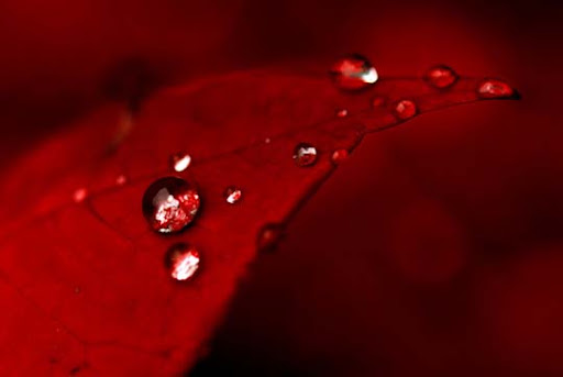 RED by Inadesign Gorgeous Red Color Inspired Photography