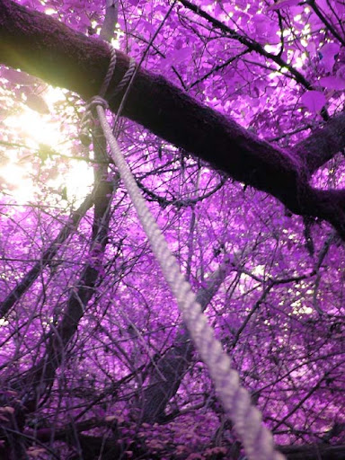 Purple Leaves The Purple Power | Stunning Photography Feature