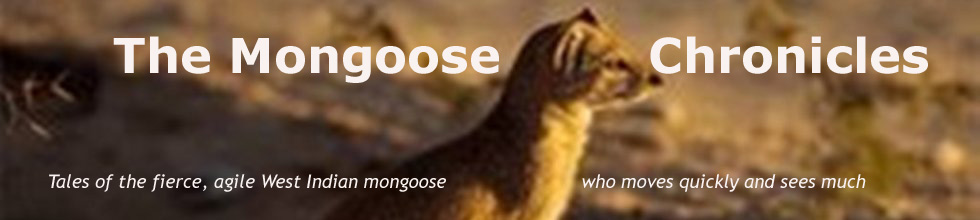 The Mongoose Chronicles