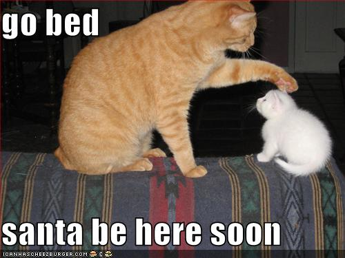 funny cat picture - funny cat pictures-funny-christmas-cats-lolcat funny hilarious lolcat