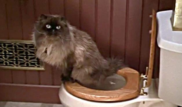 Seaseight design blog interior design cats in a tiny - Cosa fare quando non riesci ad andare in bagno ...