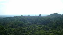 Tikal - View from a temple