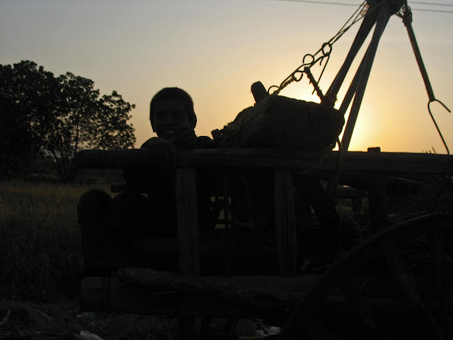 happy boy on bullock cart silhouette