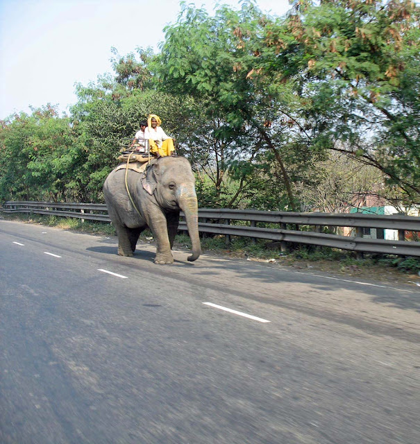 elephant with mahout on highway
