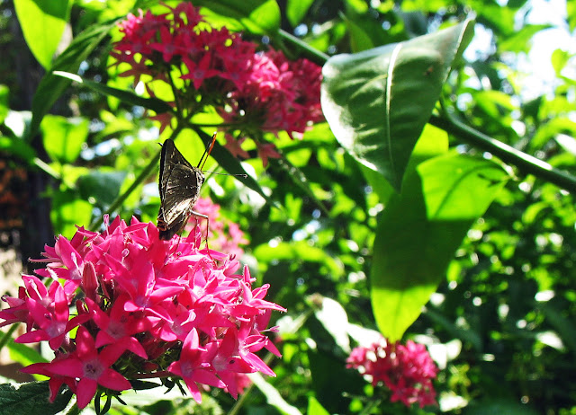 side view of butterfly on flowers