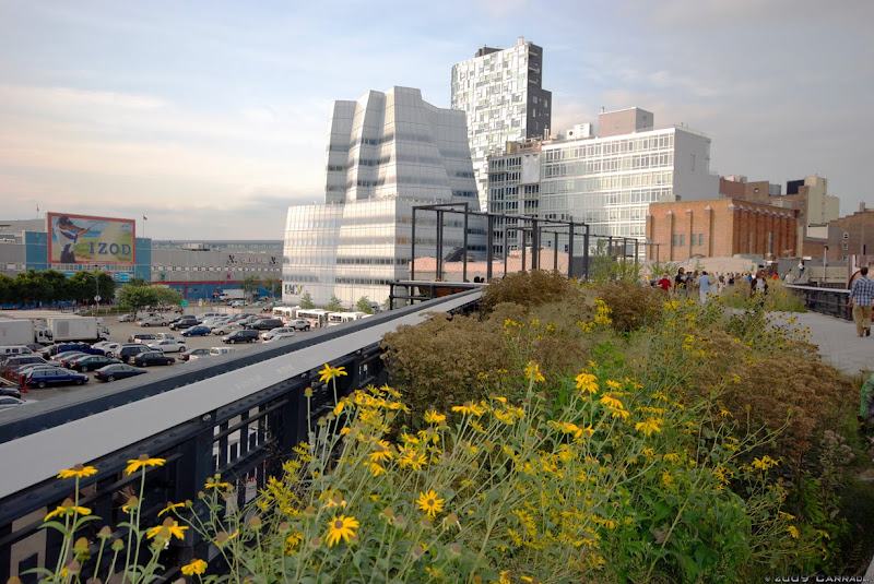 TheHighLinePlusGehry.jpg