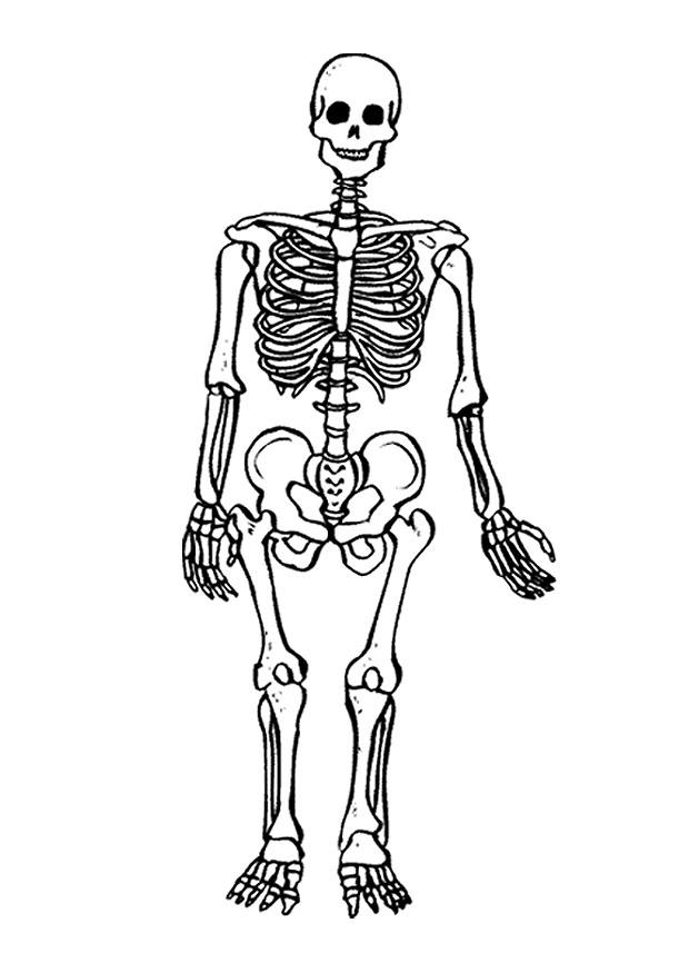 SECRETOS: El esqueleto: Para colorear